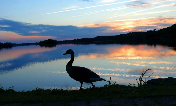 otto-photo dieksee sundown ente
